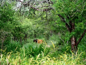 Preocupación de profesionales por el destino de fondos de la Ley de Bosques a promover ganadería en ecosistemas naturales
