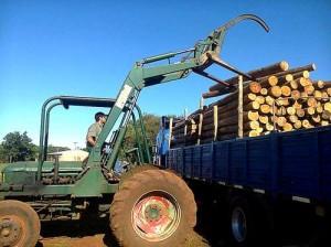 Empresarios misioneros abastecerán de postes de eucaliptus a Vaca Muerta