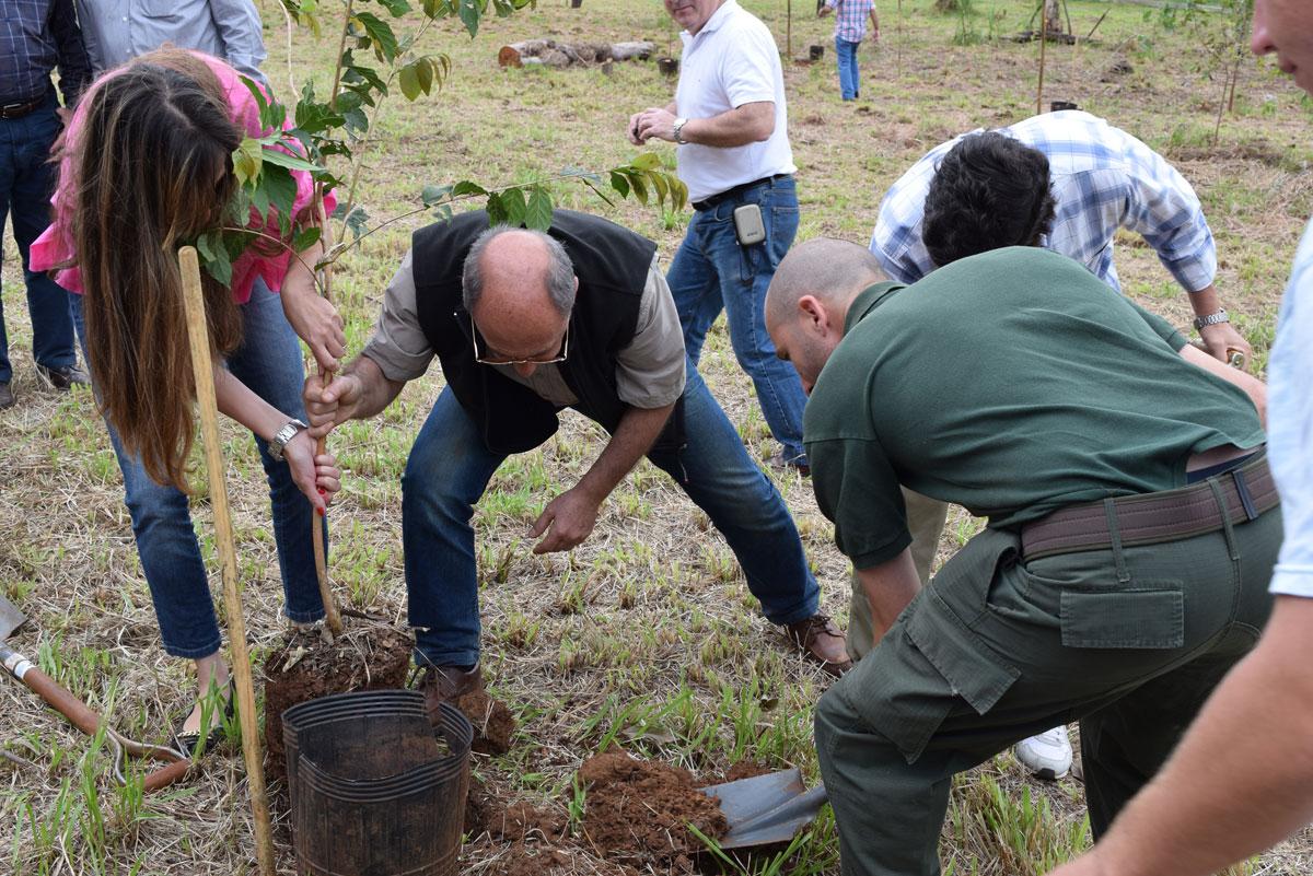Plantan en Misiones el árbol nativo número 100.000, un ejemplar bendecido por el Papa Francisco