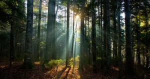 Investigaciones demuestran que todos los ecosistemas con bosques están en agonía por causas humanas