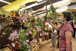 La fiesta de la Orquídea se realizará de 8 al 12 de octubre