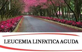 """""""Alma"""" expande su asistencia a más familiares y pacientes con leucemia"""