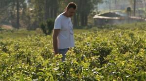 Productores de té se reunieron en Campo Viera y resolvieron denunciar a los secaderos que reciben té antes de la zafra