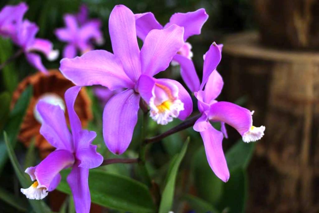 En la Biofábrica desde mañana «Misiones en flor» con ventas de orquídeas, capacitaciones y espectáculos