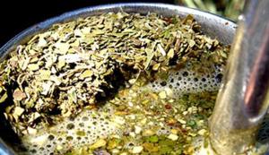 Graduados de la UNaM buscan mejorar la calidad de la yerba mate