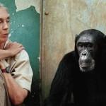 Ya de niña, Jane Goodall soñaba con viajar al África para estudiar a los animales y escribir libros sobre ellos. Hoy, es la mayor experta en comportamiento de chimpancés