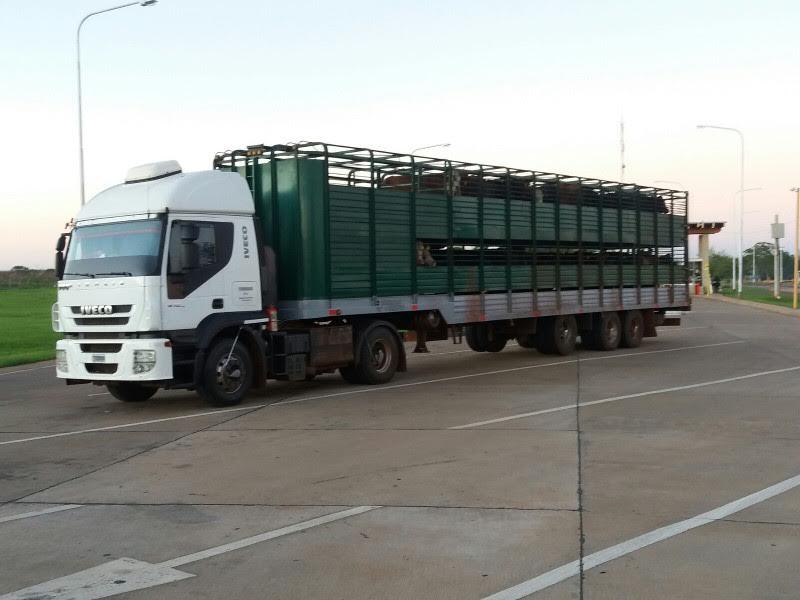 La DGR retuvo un camión que no tenía la documentación respaldatoria para el ingreso de ganado en pie en la provincia