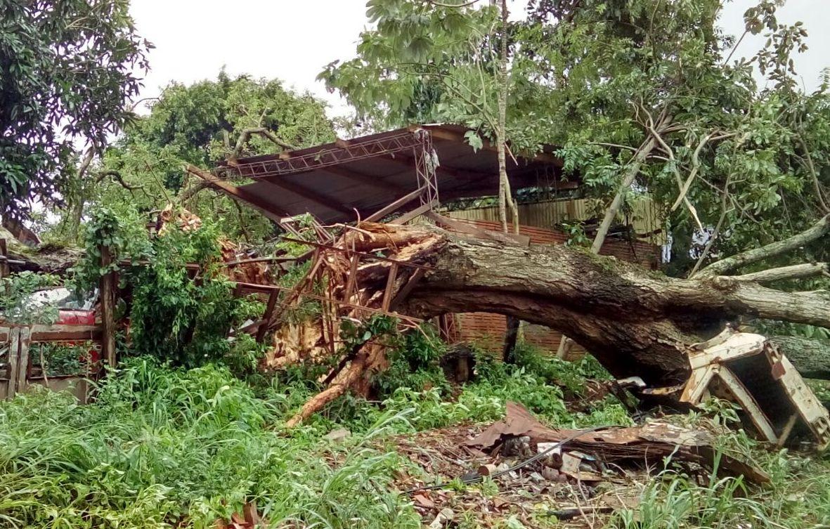 Eldorado: en plena tormenta un árbol cayó sobre un remis y aplastó a una madre que viajaba junto a sus hijas
