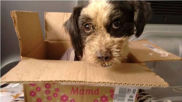 Solidarios: rescatan animales enfermos y abandonados, los curan, los contienen y le buscan una familia adoptante