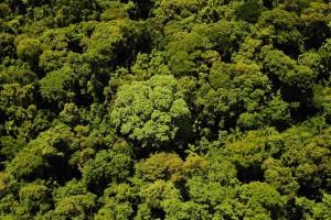 El rol clave de la forestación sustentable en la COP21
