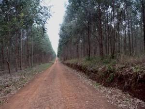 FSC otorgó a la chilena Arauco la certificación por sus plantaciones forestales en Misiones