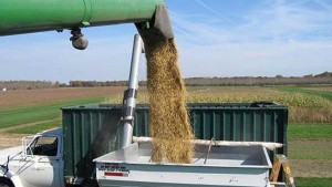Advierten que sojeros no liquidan por los bajos precios internacionales