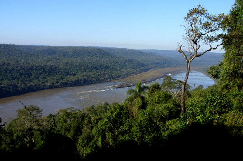El 2016 abre un nuevo escenario para proyectos de inversión en Misiones basados en sus recursos forestales