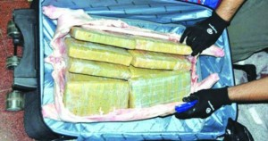 Hallan 40 kilos de marihuana dentro de lechón