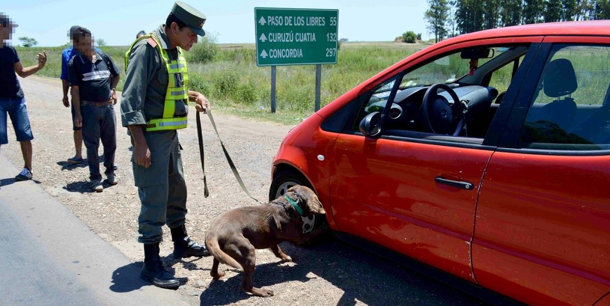 Había salido de Posadas: con un can detector Gendarmería logró secuestrar 87 kilos de marihuana en Corrientes