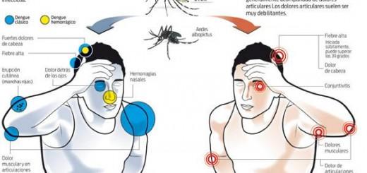 Recomendaciones del Ministerio de Salud para la prevención y detección temprana del de dengue, chikungunya y zika