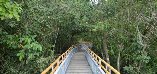 """Explican por qué el Parque Nacional Iguazú está """"libre de dengue"""""""