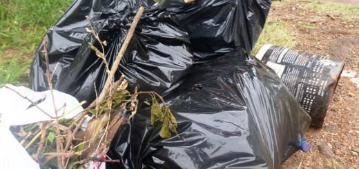 En Posadas, desde hoy los propietarios de baldíos tienen cinco días para limpiarlos