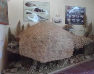 Guardavidas de Miramar realizaron un notable hallazgo paleontológico
