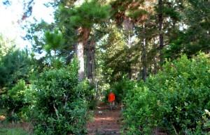 Plantean que por medio de cooperativas industriales mejoraría la posición de productores forestales en la negociación de precios