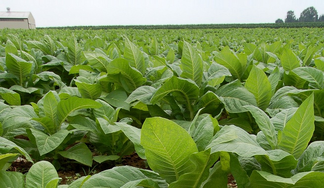 Tabaco: las mismas empresas que ofrecen suba de 18% en Misiones acordaron  aumento de 28% en Salta y Jujuy - MisionesOnline