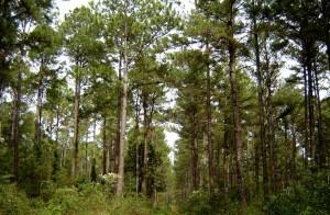 El futuro del planeta depende del manejo de los bosques y el desarrollo de una foresto-industria sostenible