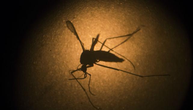 Confirman muerte por dengue en Chaco