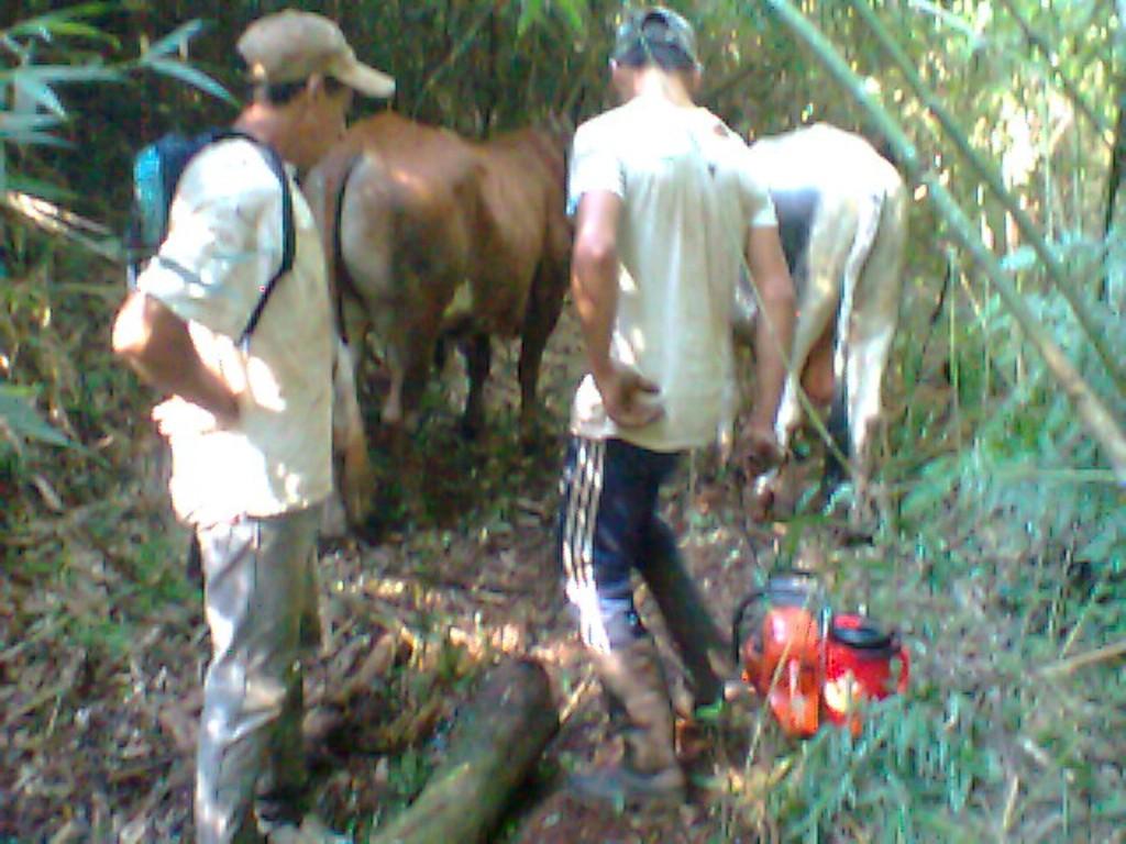 Ecología colabora con la comunidades Mbya Guaraní de Pozo Azul en el cuidado de su patrimonio natural