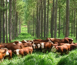 La Nación liberó 28 millones de pesos para el pago de planes forestales de productores misioneros