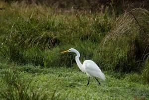 Ecología y Dachary organizan el primer congreso de biodiversidad y derecho en Iguazú