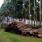 Gobierno nacional analiza las políticas a desarrollar para el sector foresto-industrial