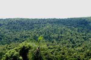 Misiones no es bien compensada por su conservación por la Ley de Bosques Nativos