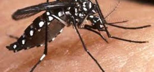 Hasta la fecha se han registrado 13.400 casos sospechosos de dengue en Misiones.
