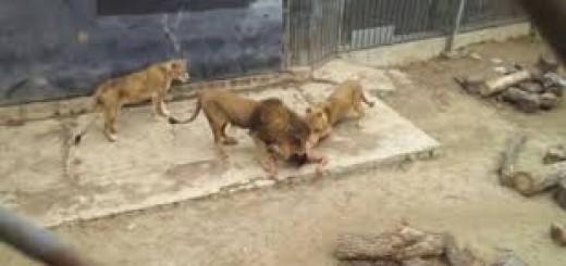 La dura infancia del joven que se tiró a la jaula de los leones para quitarse la vida