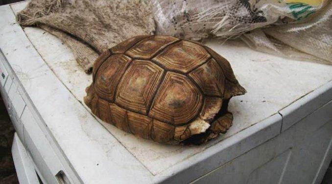 Desalmada y exhibicionista: mutiló una tortuga, le sacó fotos y las subió a Facebook