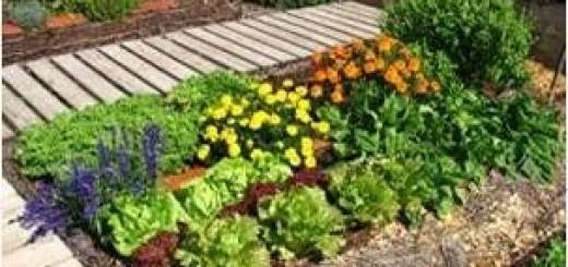 Lanzan un plan para que los vecinos de Posadas planten alimentos en las veredas