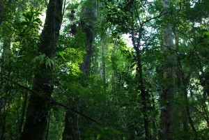En la semana del Ambiente, Misiones será sede del 1º Congreso de Biodiversidad y Derecho