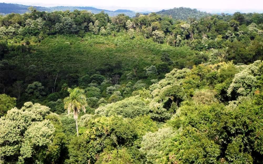 Proponen crear fiscalías ambientales en Misiones