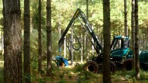 Mecanización en cosecha forestal, un paso inevitable de Pymes de Misiones para mejorar el rendimiento y la competitividad