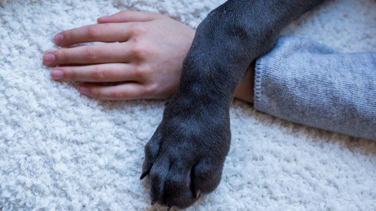Día Nacional del Perro: ¿por qué siempre será el mejor amigo del hombre?