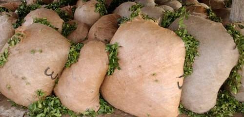 Misiones planteó reducir la cantidad de palo en la yerba mate
