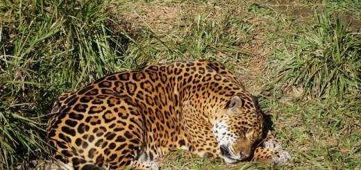 """El parque ecológico"""" El Puma"""" un lugar para disfrutar en familia"""