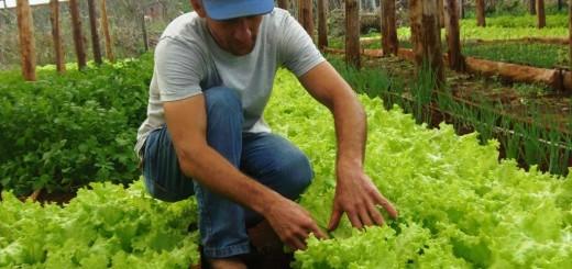 Productores urbanos de Eldorado cultivan y venden hortalizas a verdulerías y en los barrios de la ciudad