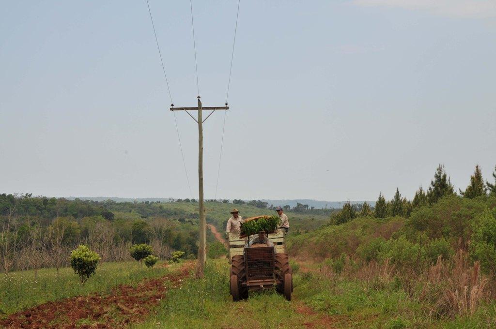Nación financiará obras de electrificación rural en Misiones