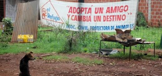 Presentan proyecto para crear un programa de adopción de animales abandonados