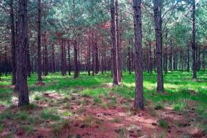 Perspectivas de las políticas forestales en las jornadas técnicas de la Facultad de Ciencias Forestales y el INTA Montecarlo