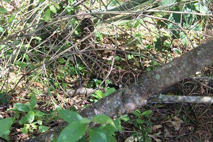 Liberaron serpientes y arañas en la Reserva del Campo San Juan de Misiones