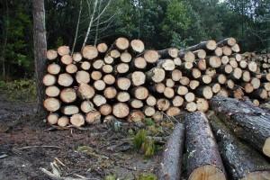 Se reaviva la política forestal provincial con la herramienta de un plan estratégico y un instituto para el sector