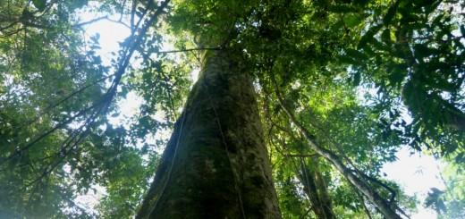 El 2017 sería el peor año de asignación nacional presupuestaria para los bosques nativos