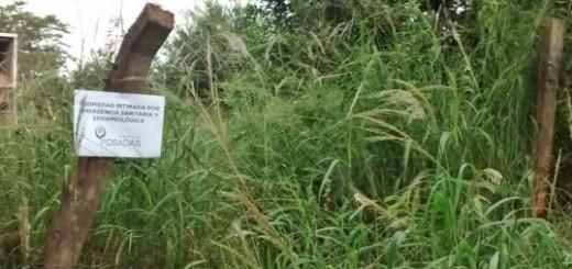 Dengue: intiman a propietarios que no limpian sus baldíos en Posadas